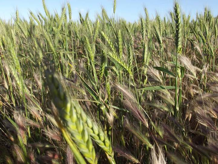 Which are wheat and which are tares? Do you know?